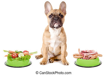 Vegetables or meat for the dog - a dog has the choice...