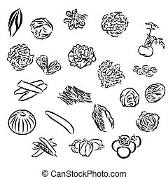 vegetables Sketch Outline Vector Artwork