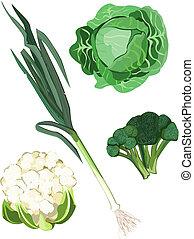 Vegetables - Vegetable icons on white background