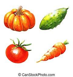 Vegetables, watercolor illustration