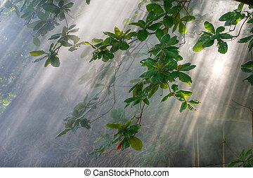 vegetación, mañana, luz del sol