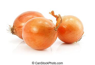 vegetal, aislado, cebolla, fruits