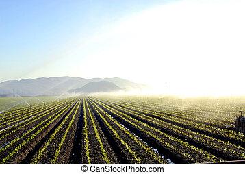 vegetal, campo