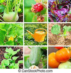 vegetal, conjunto, jardín