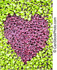 vegetal, corazón