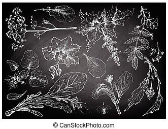 vegetal, dibujado, frondoso, ensalada, mano