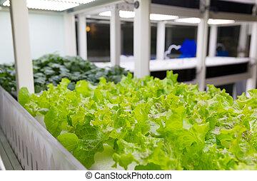 vegetal, fazenda, cultivo, orgânica, hydroponic