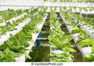 vegetal, fazenda, hydroponics