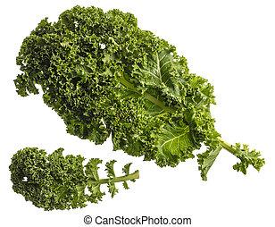 vegetal, frondoso, blanco, primer plano, col rizada