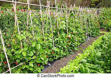 vegetal, garden.