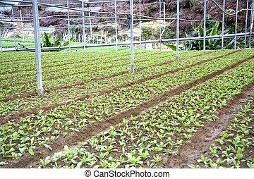 vegetal, granja