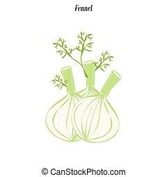 vegetal, hinojo, ilustración