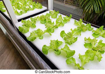 vegetal, hydroponics