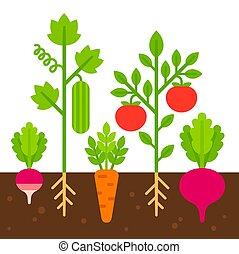 vegetal, ilustración, jardín