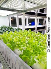vegetal, indoor, orgânica, hydroponic