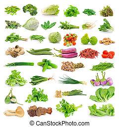 vegetal, isolado, branco, fundo