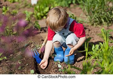 vegetal, niño, jardín