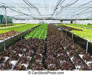 vegetal, orgánico, jardín, hydroponic
