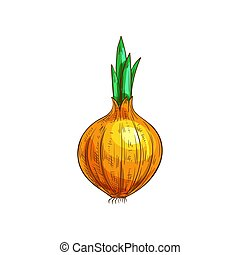 vegetal, raiz, isolado, esboço, bulbo, cebola