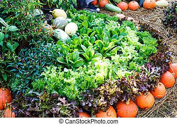 vegetal, tailandia, jardín
