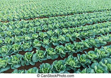 vegetal, verde, fazenda