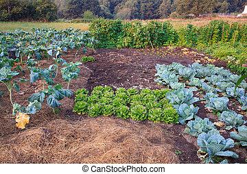 vegetal, vista, jardín