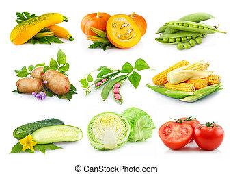 vegetales, conjunto, otoñal, blanco, aislado