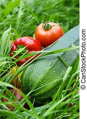 vegetales, pasto o césped, fondo verde
