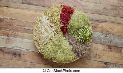 Vegetarian concept food. A set of different sprouted seeds ...