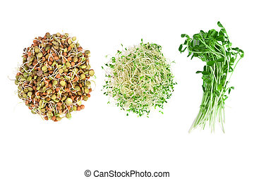vegetarian food of alfalfa, snow peas and lentils isolated ...