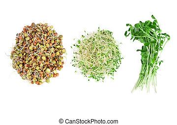 vegetarian food of alfalfa, snow peas and lentils isolated ...