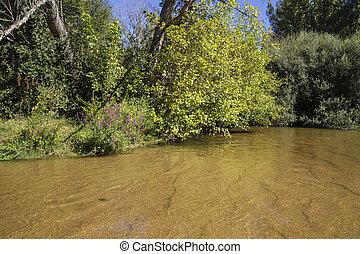 vegetation, alberche riverbank in Toledo, Castilla La Mancha, Spain