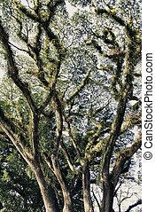 Vegetation and Colors of Cape Tribulation, Queensland - ...