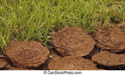 Vegetation and mud blocks - A steady, close up shot of...