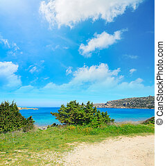 vegetation by Capo Testa coastline, Sardinia