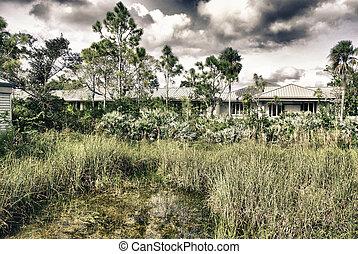 Vegetation in Florida, U.S.A.