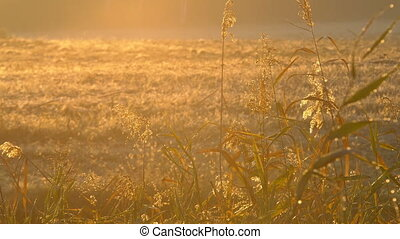 Vegetation in the rays of the autumn sun
