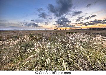 vegetation, landschaftsbild, gras, natürlich, heathland