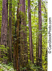 Vegetation of an Old Growth Coastal Forest