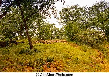 Vegetation of Central Park in Manhattan, New York City