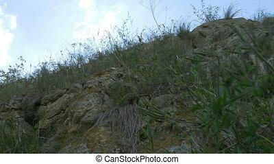 Vegetation on Mountain Rocks