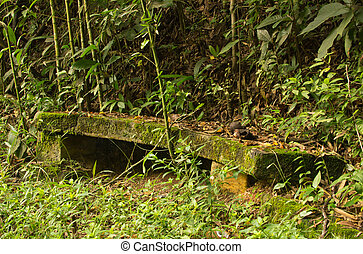 Vegetation taking over a bench