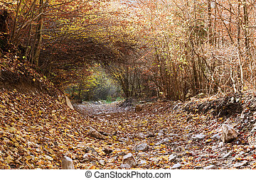 vegetation tunnel on a mountain road
