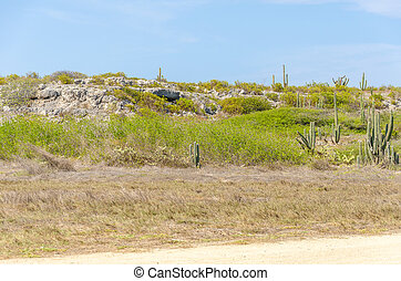 Vegetation view from Baby beach on Aruba