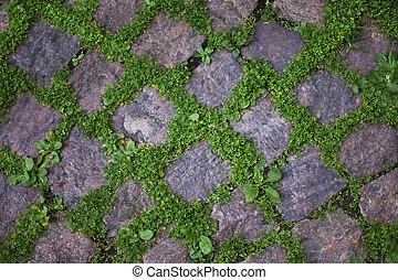 vegetation, zwischen, der, pflasternde steine
