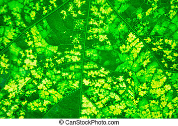 vegetative, fondo verde