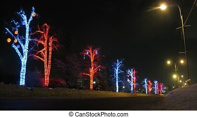 Vehicles pass in front of illuminated trees, time lapse