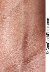 vein on human skin
