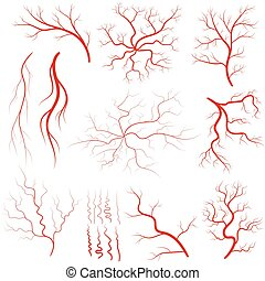 Vein set, Human vessel, eye veins vector - Vein set, Human...