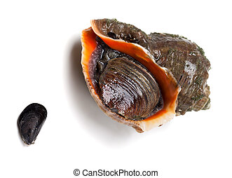 Veined rapa whelk and small mussel from Black Sea. Isolated...